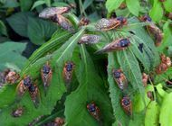 Brood X Cicadas to Emerge on Appalachian Trail After 17 Years