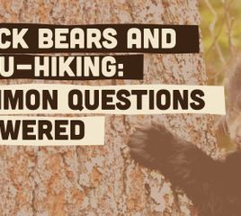 Black Bears and Thru-Hiking: Your Questions Answered