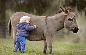 I Think I'm Gonna Need A Donkey…
