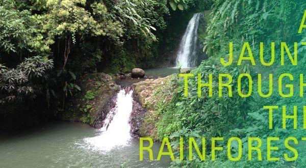 A Jaunt Through the Rainforest: Exploring Grenada's Grand Etang National Park
