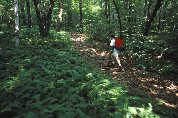 A Trail with a View: Protecting the Viewshed of the Appalachian Trail