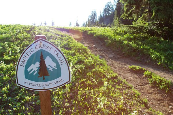 PCT Hiker Dies after Tree Falls on Him in Washington