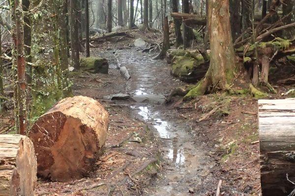 Weathering the Rain on the Appalachian Trail
