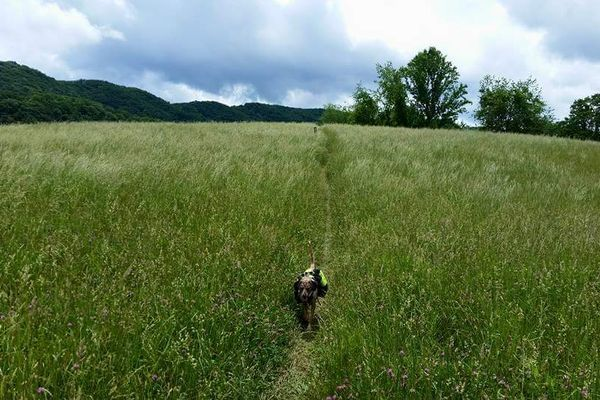 Dogs and Trails