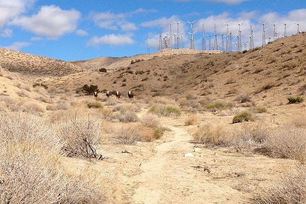 3 Tips for Hiking Through the PCT Desert