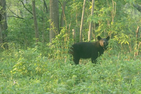 Three Important Black Bear Safety Tips