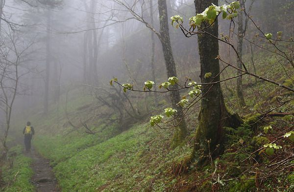 What the Appalachian Trail Will Look Like in 2025