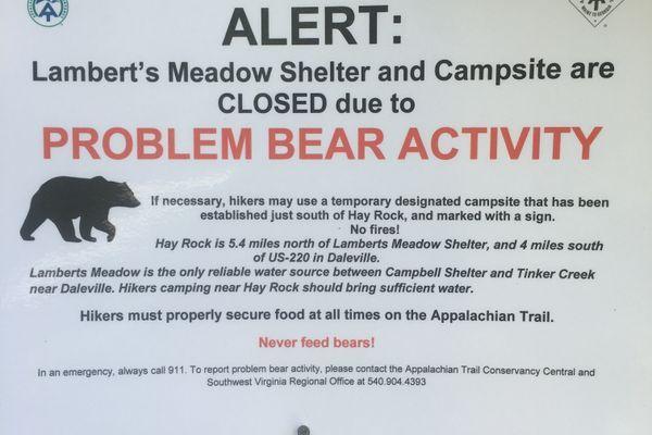 The Problem Bear