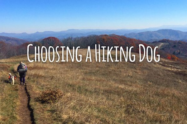 Hiking With Dogs 101: Choosing a Hiking Dog