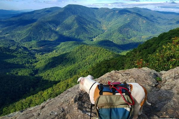 Dogs and The Smokies: What You Need to Know