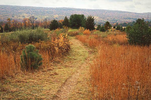 When I successfully thru-hike the Appalachian Trail, I will…