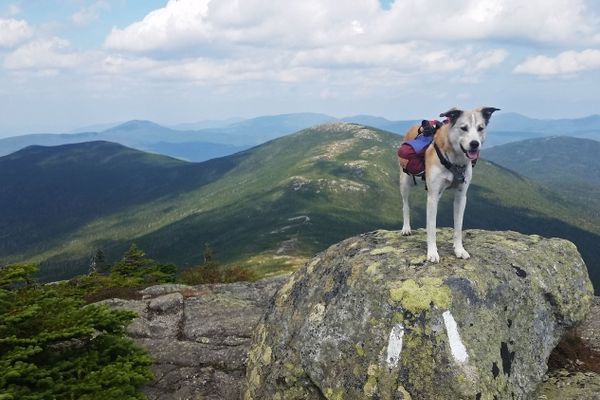 How My Dog Survived a Thru-Hike With Me: Keeping Them Healthy
