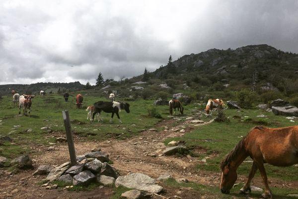Appalachian Trail Update: Mile 420.2 – Mile 532.4