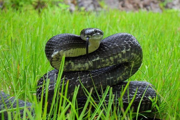A Love Letter to the Black Snakes of the Appalachian Trail
