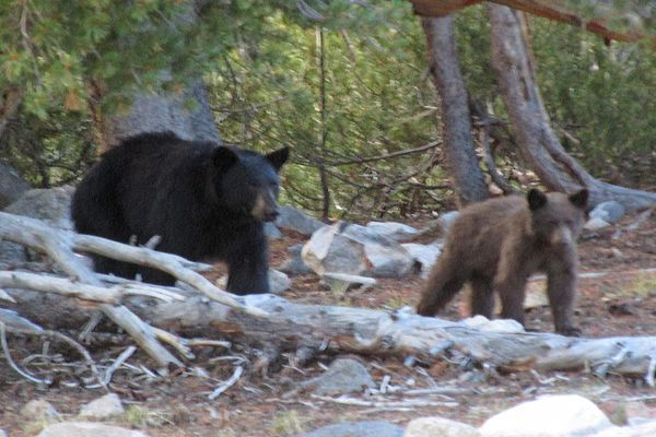 17 Miles of the AT Temporarily Closed to Overnight Camping in Virginia Due to Bear Activity