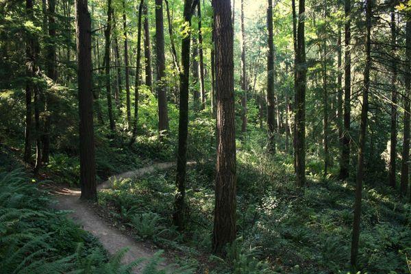 The One-Day Thru-Hike: Oregon's Wildwood Trail