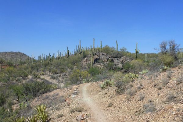 Growth Through Failure on the Arizona Trail