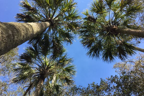 The Florida Trail: A Love Letter