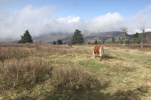 The Grayson Highlands: Virginia's Fairyland