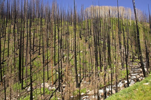 Wildfires Continue to Close Sections of Pacific Crest Trail