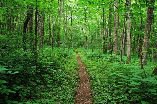 72-Year-Old Hiker Killed by Falling Tree on Appalachian Trail