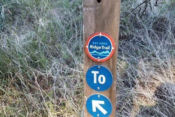 The Bay Area Ridge Trail: Bays, Bridges, and Some Really Big Trees
