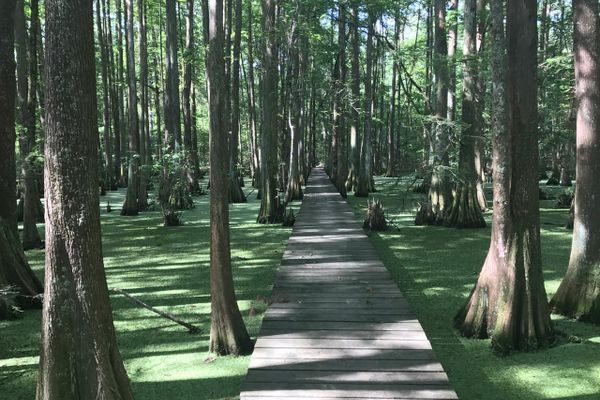Eric Heber Invites You to Hike Louisiana's Trails