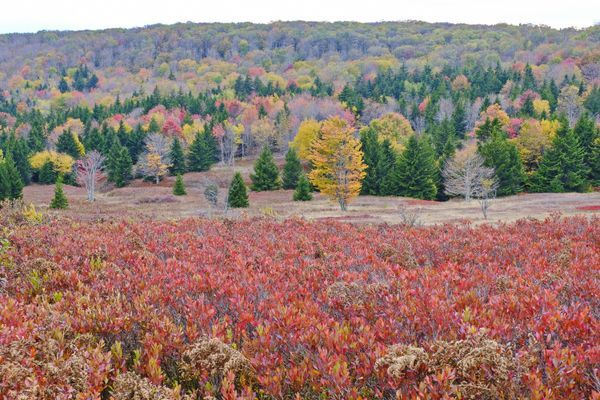 Early Leaf Peeping in the Dolly Sods Wilderness