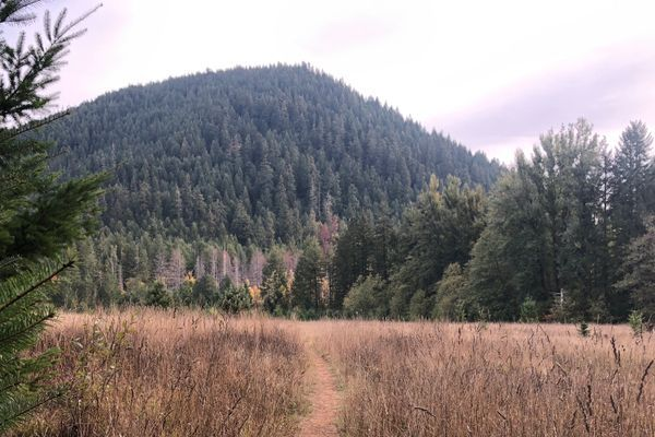 Chinook Trail – Bluff Mountain Trailhead To Panther Creek / White Salmon