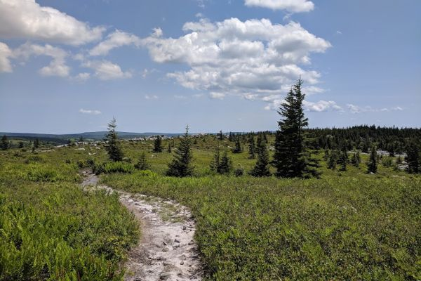 Insulin, Glucose, and Hiking, Oh My!