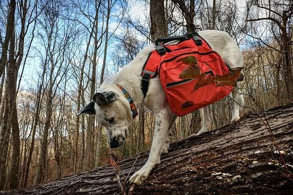 Gear List for Man's Best Friend