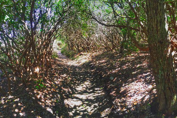 Thru-Hiking Away From Addiction