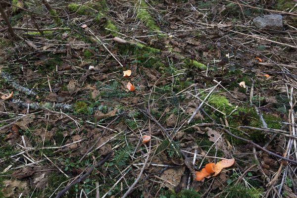 Orange Peels Don't Belong in the Forest