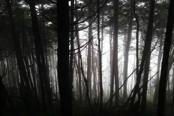 Spooky Season on the AT: My Top 10 Thru-Hiking Fears