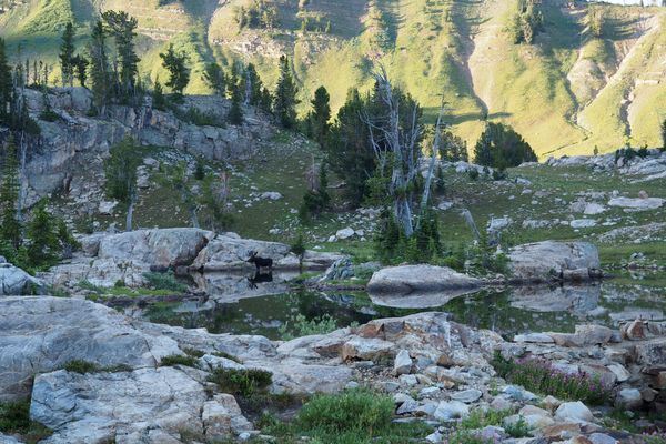 Wildlife Safety on the Great Divide Trail