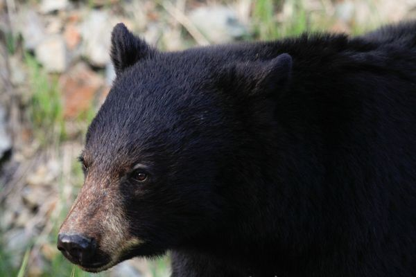 The Case for Bear Canisters on the Appalachian Trail