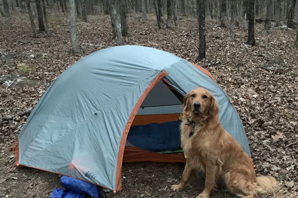 How to Dog-Proof Your Backpacking Sleep System
