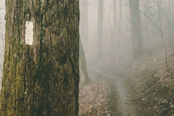 26 Gorgeous Appalachian Trail Photos to Help You Get Through the Week