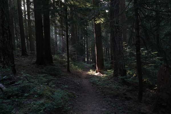 It's OK to Grieve the Loss of Your 2020 Thru-Hike