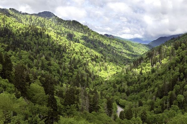 Smokies Hikes for Healing: Conversations on Racial Justice