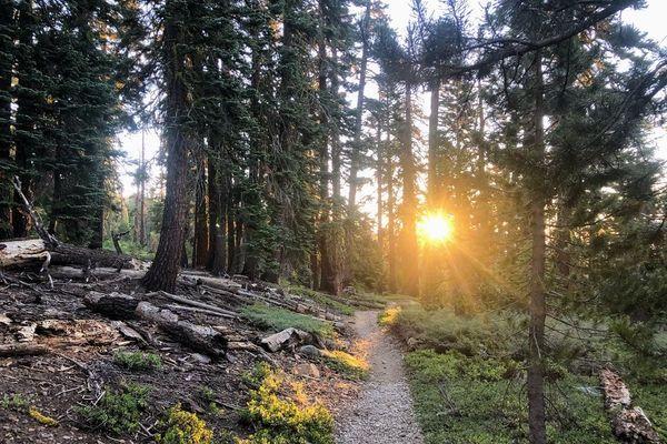 Tahoe Rim Trail: Trip Report