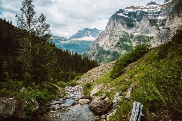 The Overgrown Madness of Glacier National Park